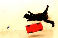 Cat in Zero Gravity, 2008
