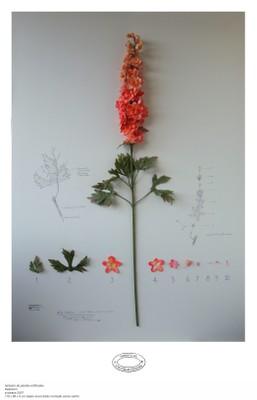 Herbario de plantas artificiales, 2002-2011