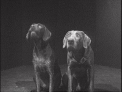 Two Dogs and Ball (Dogs Duet)